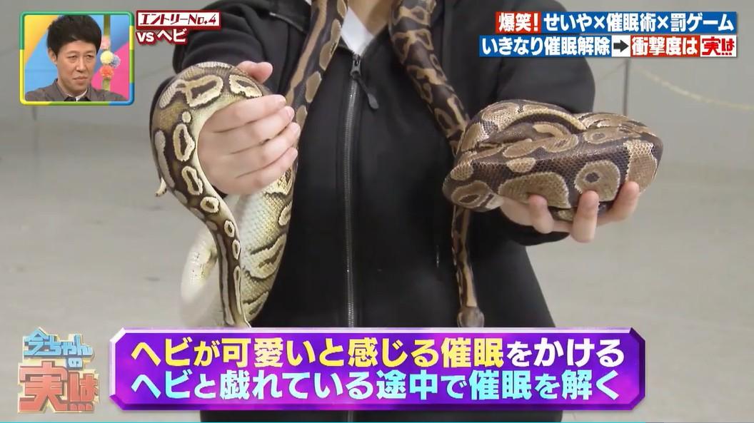蛇を可愛いと感じる催眠術